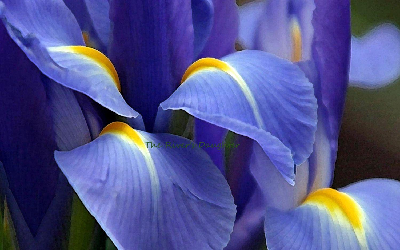 Pin On In The Garden Flower Art