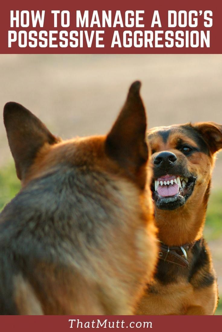how to stop aggressive dogs