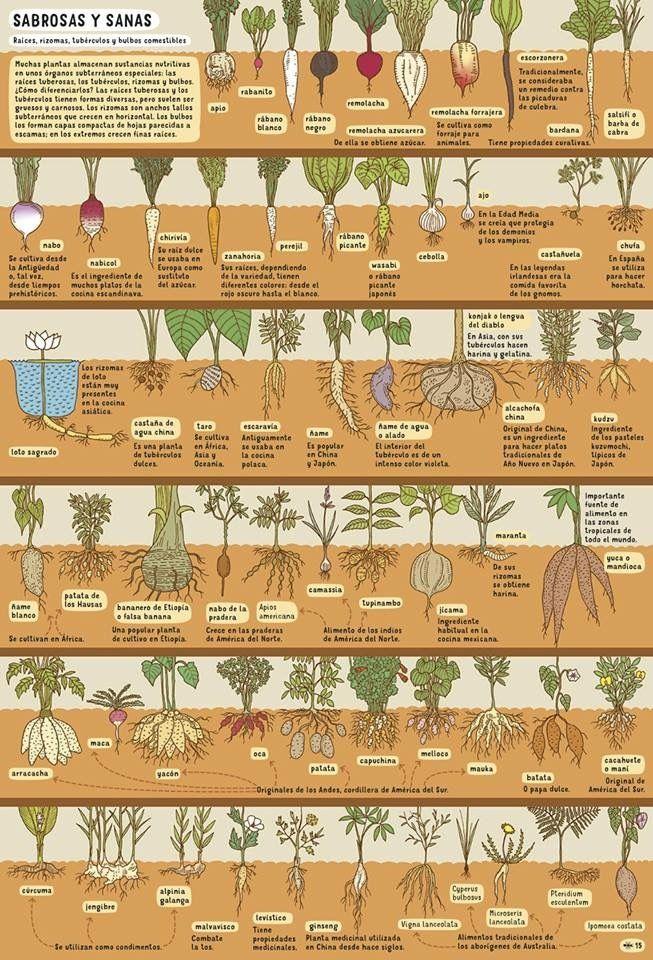 Ejemplo Instructivo Plantas Jardín De Productos