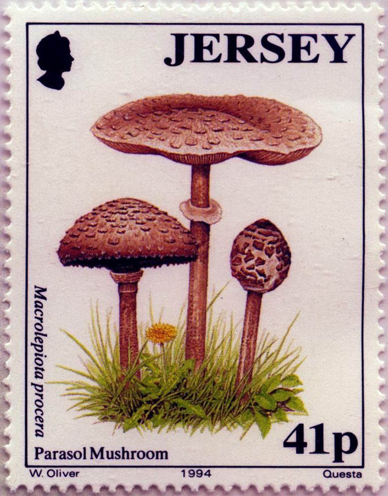 Muschrooms Aland Mnh Set