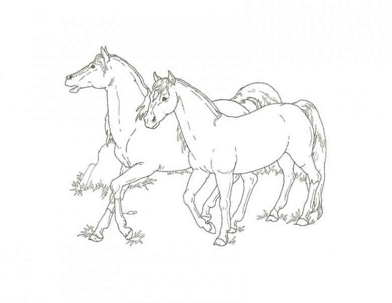 Ausmalbilder Pferde 7 Horses Ausmalbilder Pferde Ausmalbilder
