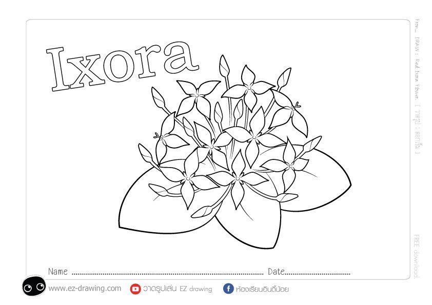 Red Ixora Flowers ดอกเข ม แดง แจกภาพระบายส Freecoloring สอนวาดร ป ดอกไม การ ต น