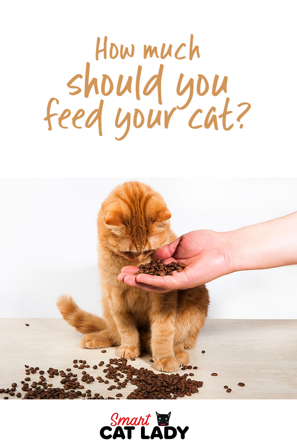 How Much Should You Feed Your Cat With Images Cat Food Wellness Cat Food Cat Feeding Guide