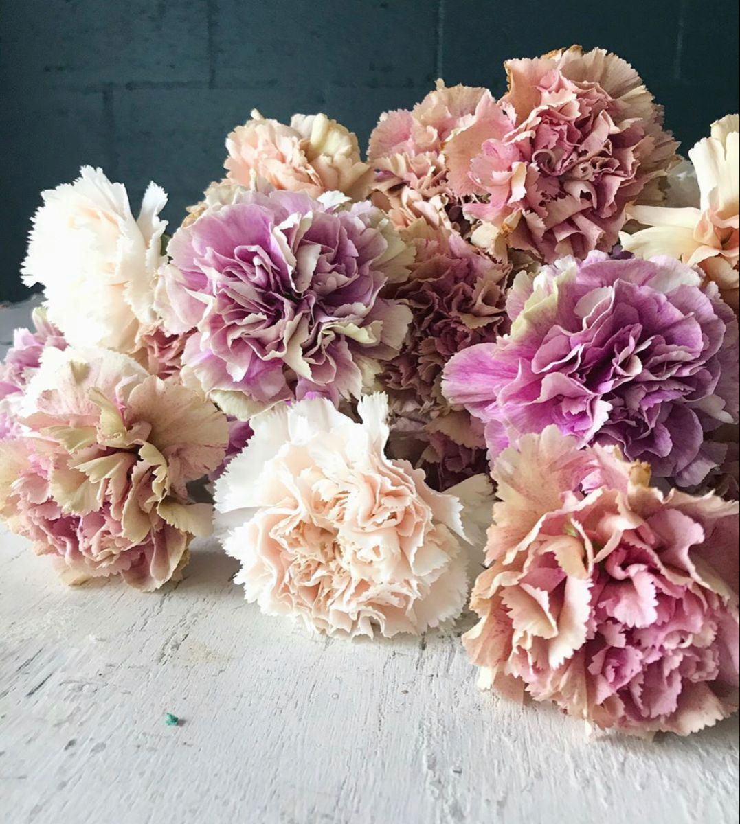 Carnation Flower In 2020 Flowers For Sale Carnation Flower Long Lasting Flower
