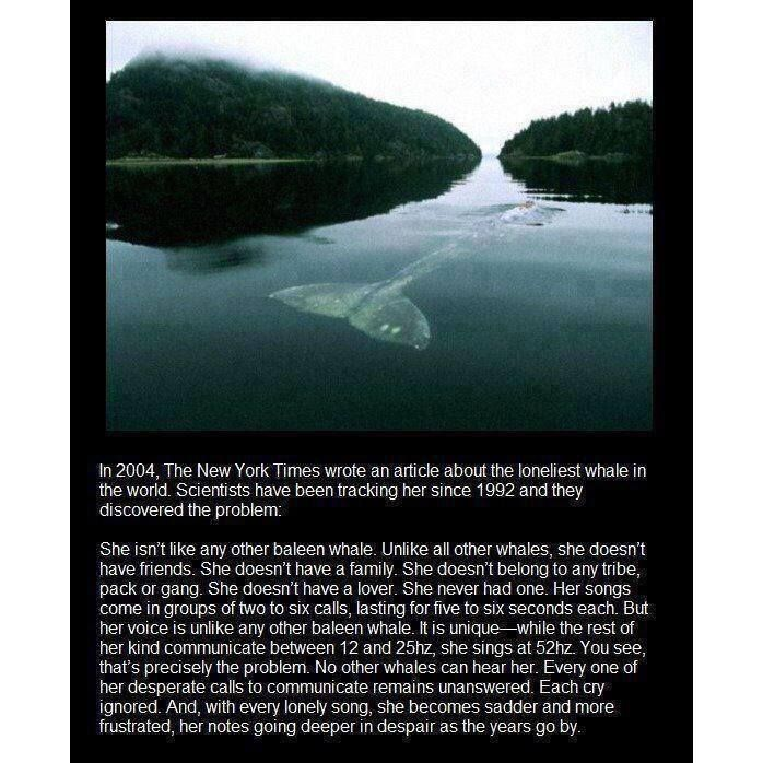 The loneliest whale -- In case you were feeling good today, this'll take care of that ...