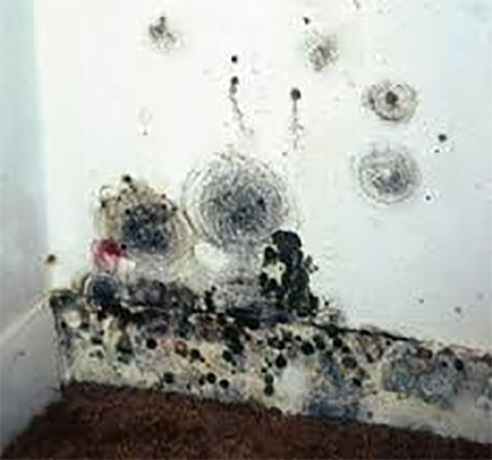 Mold In Your House Can Be Dangerous For Health You Get Sick Because Of And There Are Many Signs Symptoms To Look Out