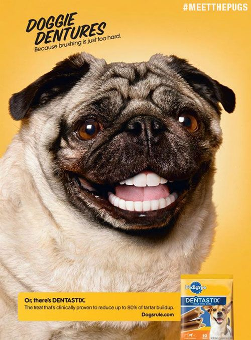 Know The Perfect Lil Guy For These Pugs Print Ads Pug Love