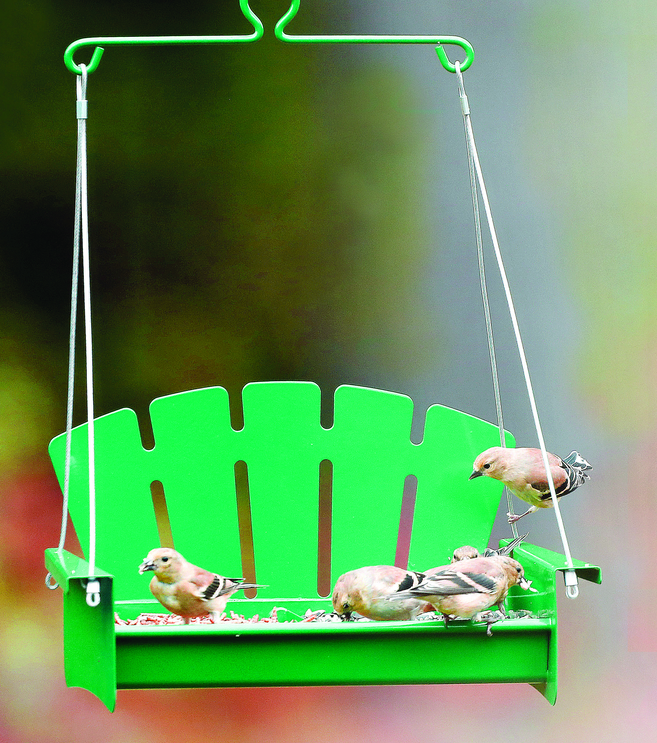 Does Your Mom Love To Watch The Birds While Swinging On