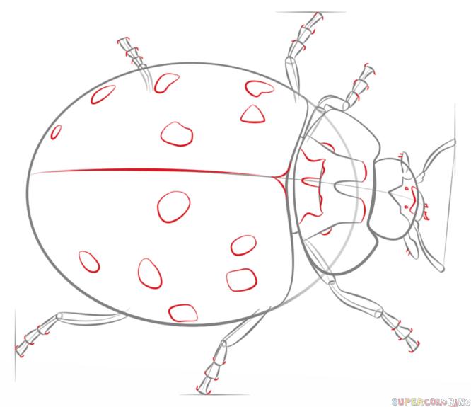 Ladybug Diagram Drawing