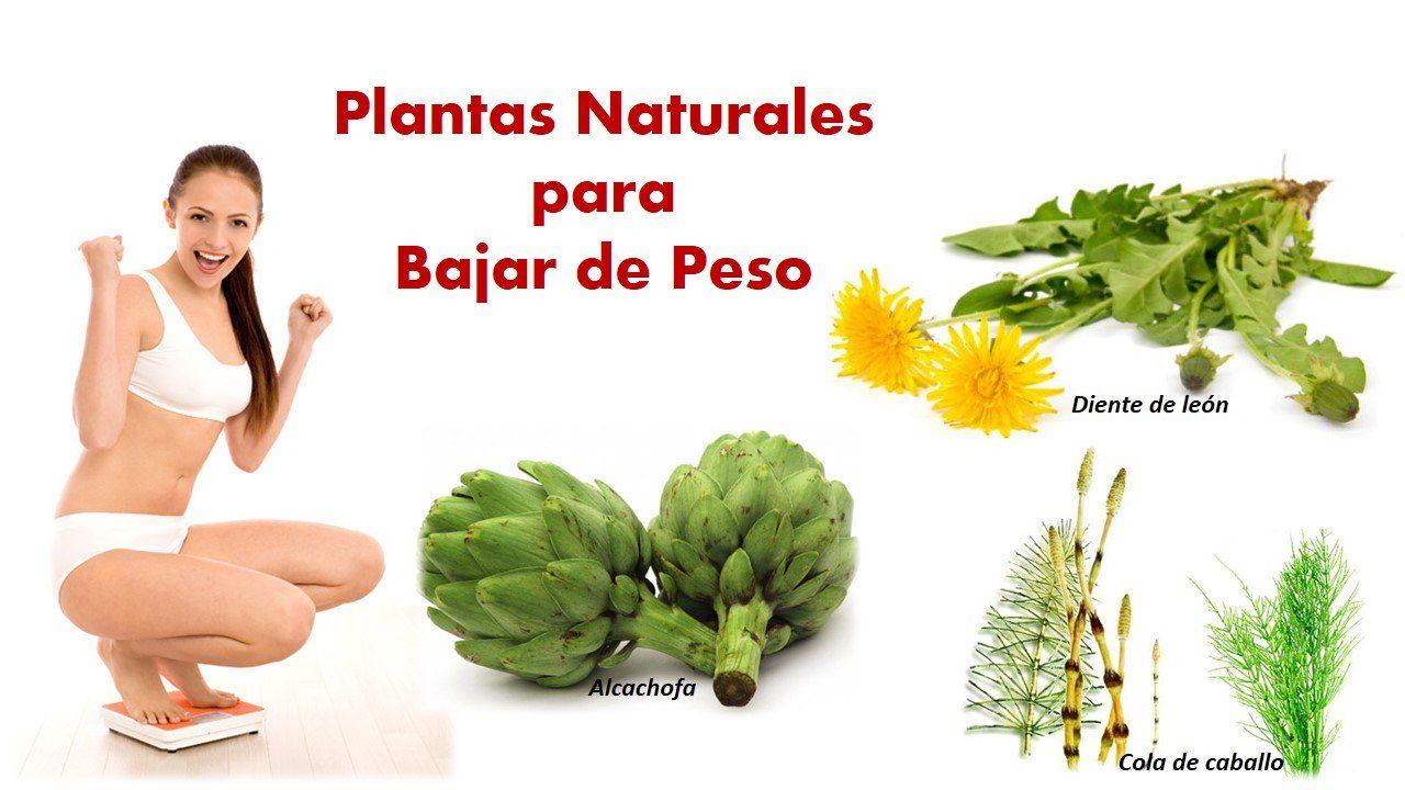 te de plantas naturales para bajar de peso