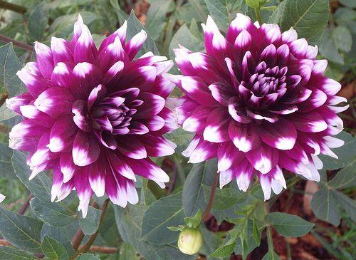 Pin Von Jessica Reese Auf Home Kids Bedroom Blumen Lila Garten Fotos Blumen