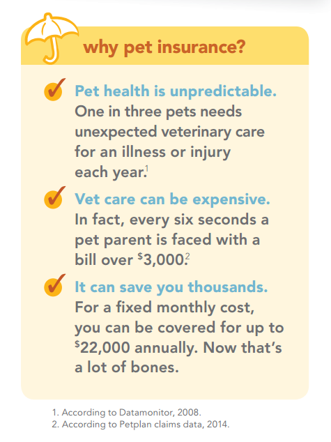 3 Reasons To Get Pet Insurance For Your Dog Or Cat Pet Health