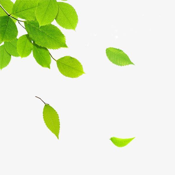 Hojas flotantes, Hojas, Los árboles, Hojas Verdes PNG y PSD