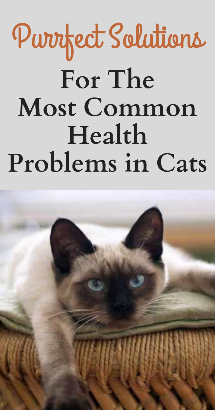 Purrfect Solutions For The Most Common Health Problems In Cats Cat Health Problems Health Problems Cat Health