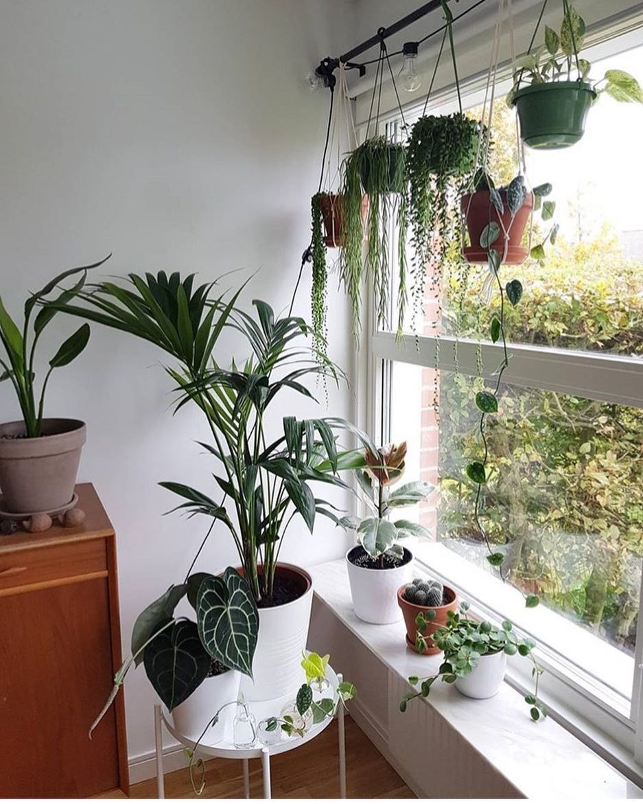 Instagram plants hanging in window on curtain rod - How to hang plants in front of windows ...