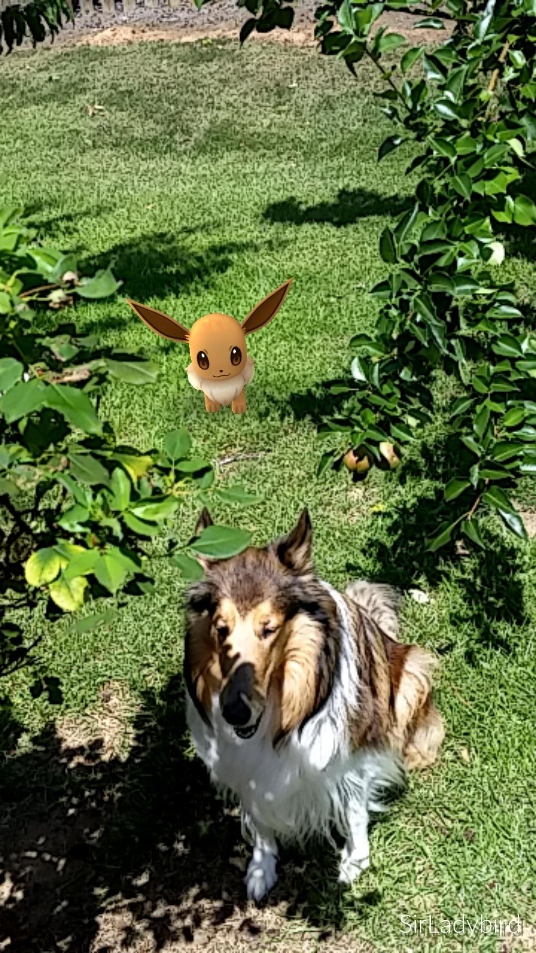 Eevee and shiny Eevee in the same location.