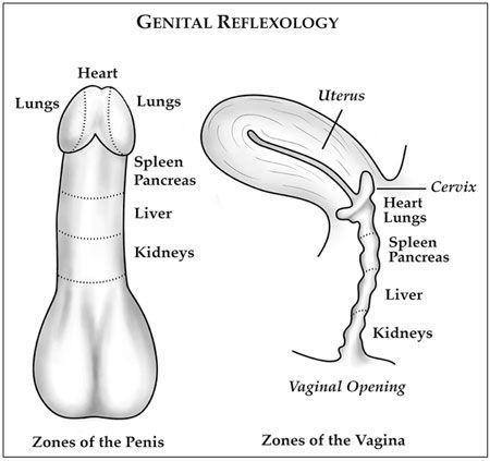 Sexual reflexology chart