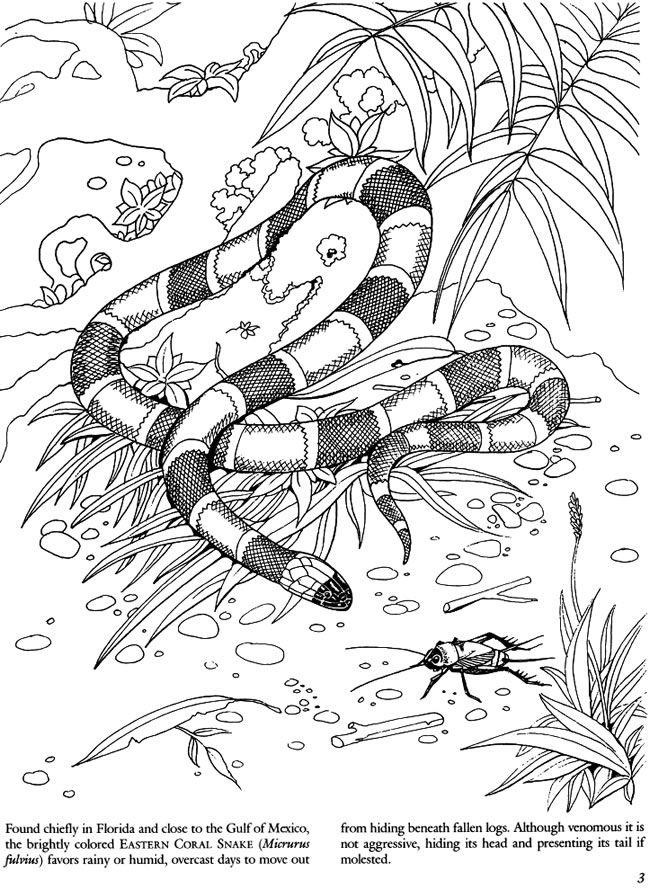 Welcome To Dover Publications Snakes Of The World Coloring Book