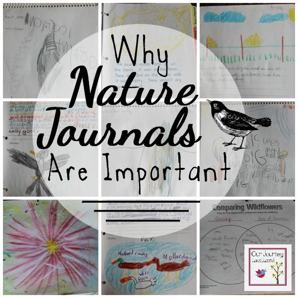 Why Nature Journals Are Important | Pinterest | Taller, Educación en ...