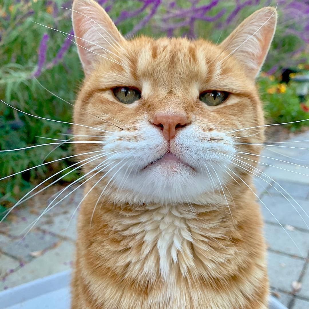 World For Cats On Instagram See I Smile On Occasions Too Marleykatz Kitty Kedi Katze Chat Neko Gato In 2020 Beautiful Cats Tabby Cat Cute Cats