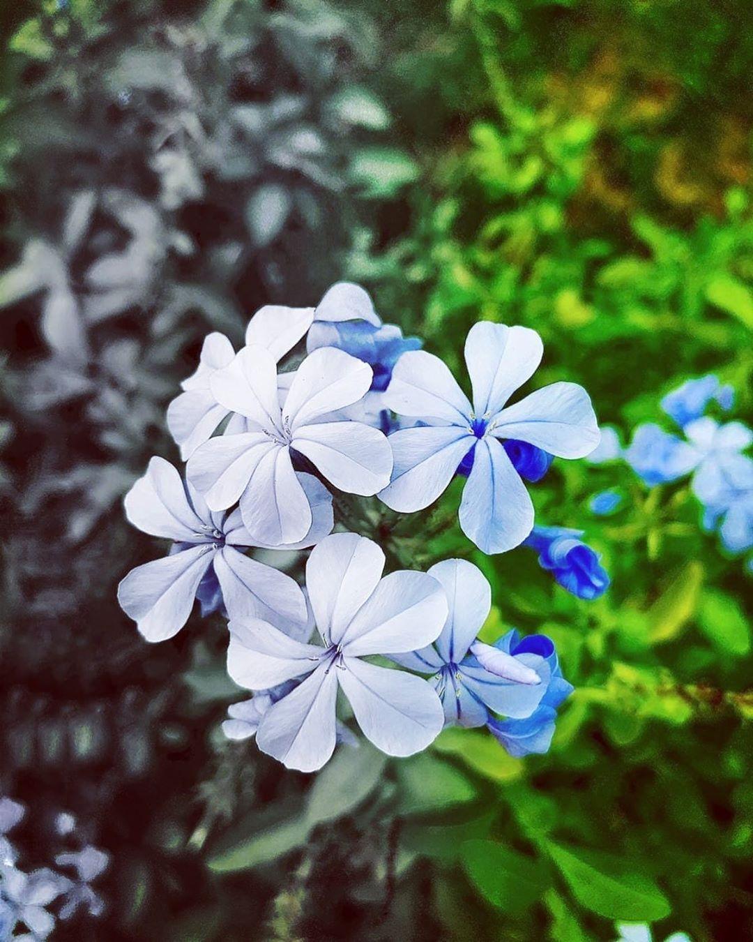 between twoshot on  xsflowers