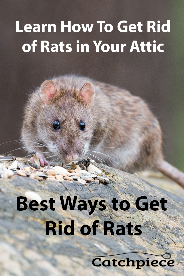 Learn The Best Way To Get Rid Of Rats In Your Attic Or Home
