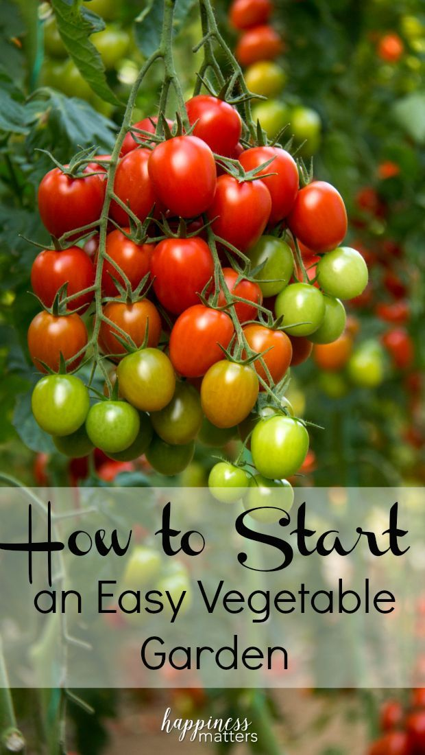 I've been recently asked about how to start an easy vegetable garden. The first few steps are fairly simple as you draw up an approximate plan of where you'd like everything to go, keeping as close to scale as possible. via @jen_dunham