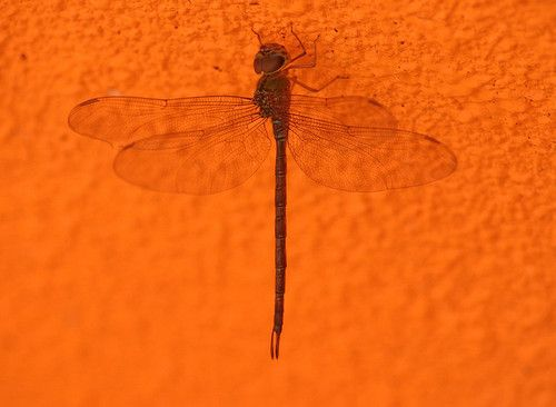 Dragonfly on ceiling of hotel