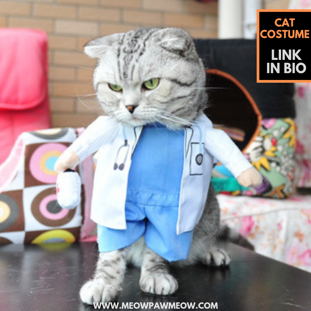In Stock With World Shipping Animals Animal Pet Dog Cat Dogs Cats Photooftheday Cute Pets Instagood Anima Cat Costumes Cat Clothes Pet Clothes