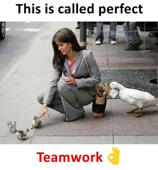 Team Work Funny Images Laughter Fun Quotes Funny Cute Funny Quotes