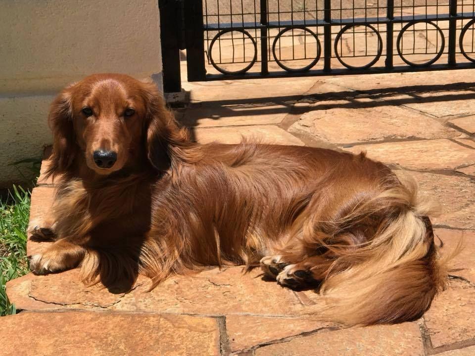 Pin by Christine on Animals Dachshund, Animals, Best dogs