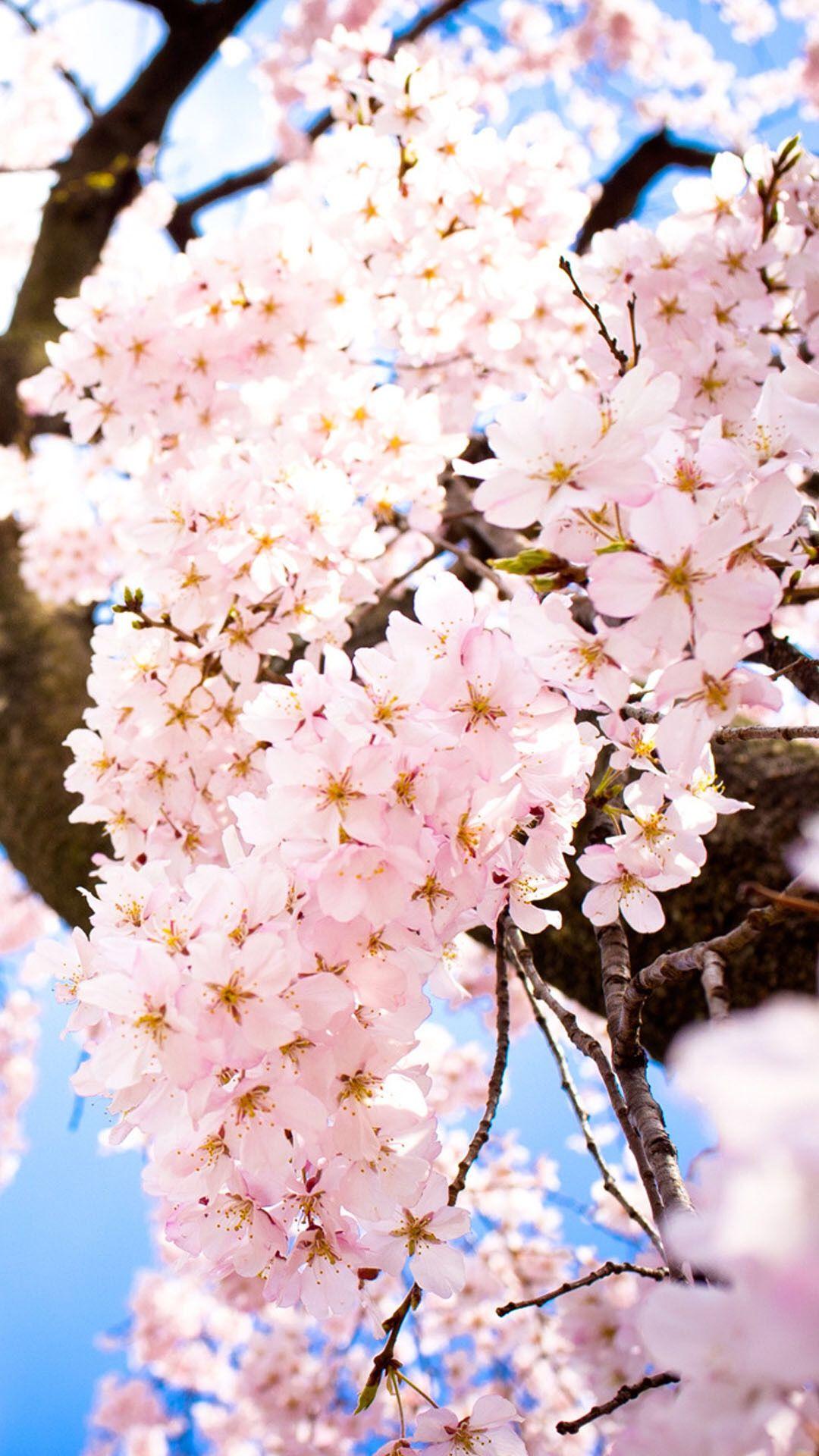 زهر اللوز Flower Phone Wallpaper Watercolor Wallpaper Iphone Flower Wallpaper