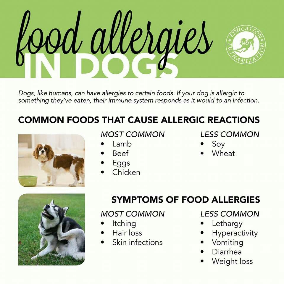 Food Allergy Chart Common Food Allergies Dog Allergies Allergies