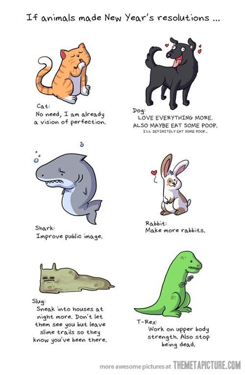If animals made New Year\'s resolutions… | Slight Meme Obsession ...