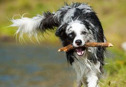 6 steps to teaching your do to fetch