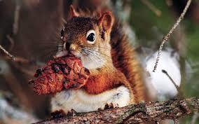 Картинки по запросу красивые фото белок | Животные, Белка ...
