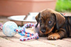 Diamond Labrador Boxer Mischling Pawshake Dogs Dog Cat Animals