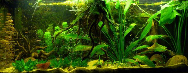 1 20m South America Biotope South America Aquascape Aquarium
