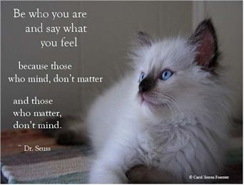 Inspirational Quotes About Cats Welcome To Signature Ragdolls Cat Quotes Cats Inspirational Quotes