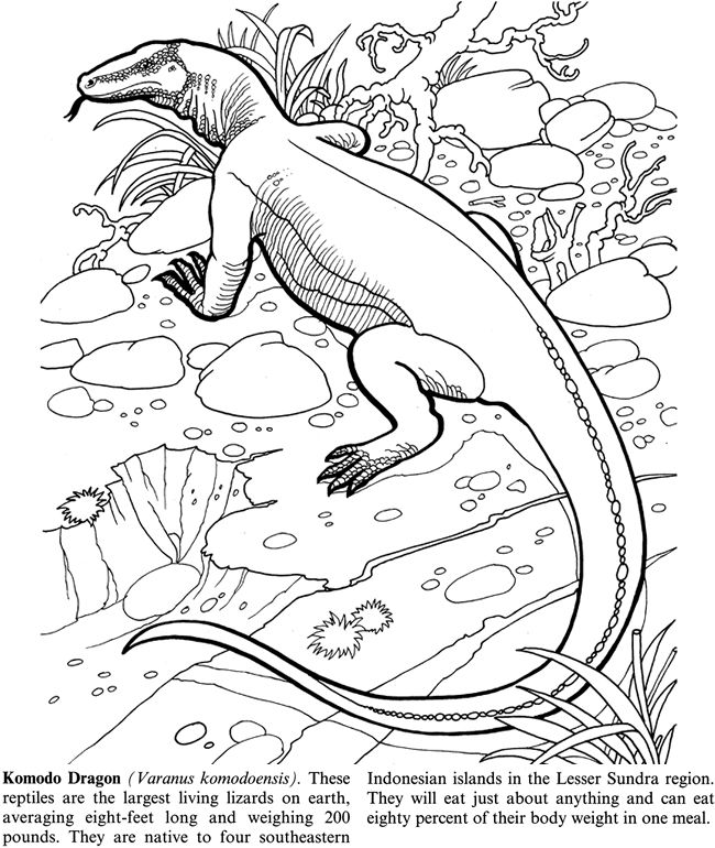 Coloring Pages Endangered Animals Zebra Komodo Dragon News