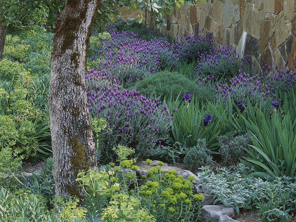 california native garden in calistoga