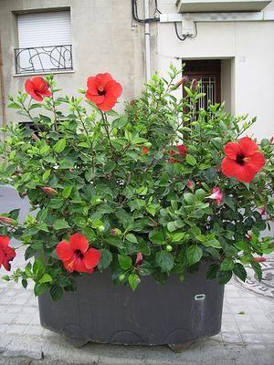 R sultat de recherche d 39 images pour planter en pot un for Offre espace vert