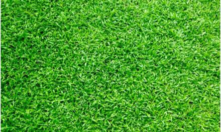 Land Estate Melbourne A Perfect Guide To Search Your Dream Estate Centipede Grass No Grass Backyard Centipede Grass Seed