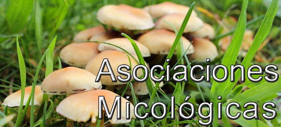 Lista de Asociaciones Micológicas