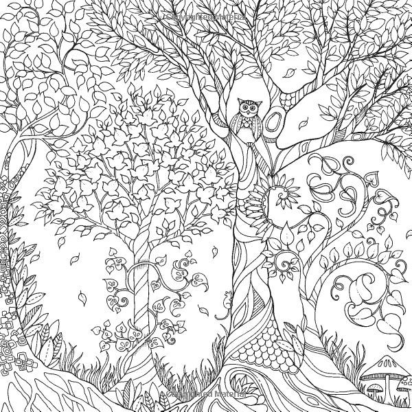 12 pics of enchanted forest coloring book pages owl