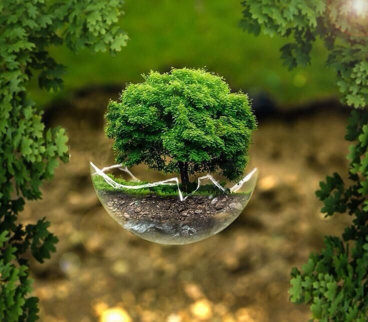 Shula On Twitter Hd Nature Wallpapers Nature Tree Nature Images Hd Natural tree background hd pic