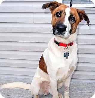 Colby - Collie/Husky mix - Washington, DC - Collie/Husky mix - 1 yr old - City Dogs Rescue DC http://www.adoptapet.com/pet/9842473-washington-dc-collie-mix