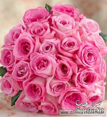 صور رومانسية اخر حلاوة صور ورد جوري ازرق صور ازهار زرقاء جوري 2017 صورورد جديدة Rose Wedding Bouquet Pink Rose Wedding Bouquet Pink Rose Bouquet