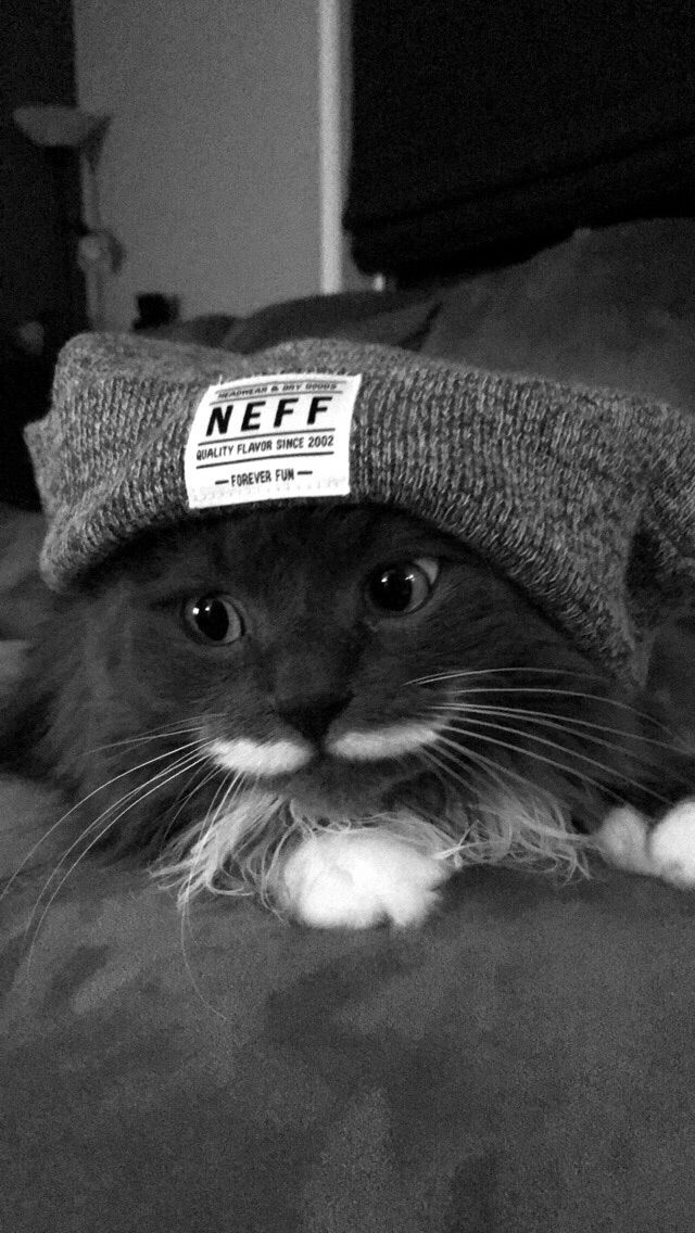My cat sparky in a beanie! Baby cats, Pretty cats, Cute cats