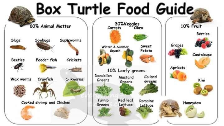 Handy Guide How To Raise A Tortoise Tortoise Food Tortoises Russian Tortoise Diet
